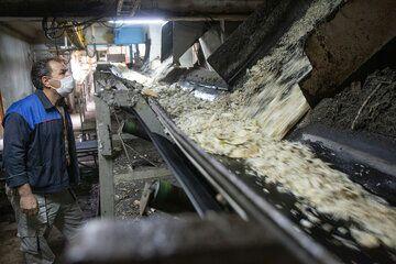 کارخانه قند بیستون کرمانشاه در سراشیبی ورشکستگی است
