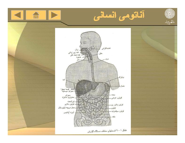 دانلود پی دی اف جزوه آناتومی انسانی