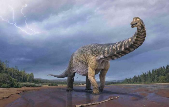 گونه جدید کشف شده در استرالیا می تواند بزرگترین دایناسور زمین باشد