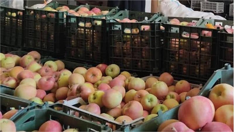 معاون امور حمایتی کمیته امداد شهرستان دماوند از توزیع ۱۰۰۰ کیلیوگرم سیب درختی میان ۲۰۰ خانواده سالمند تحت حمایت این اداره خبر داد.